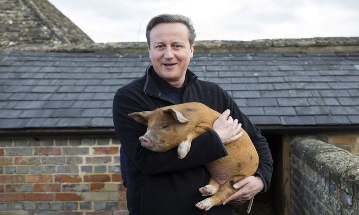 Pig Gate could cause loss of UK productivity