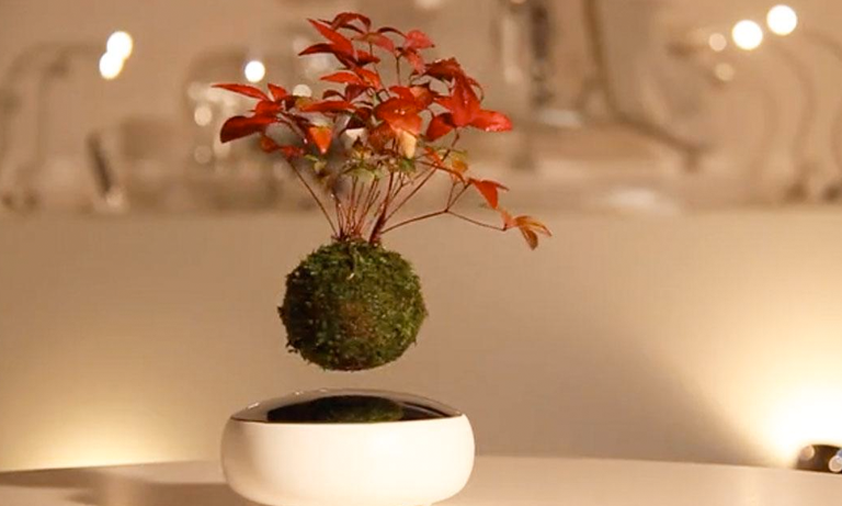 The Hoshinchu Team designers have taken bonsai trees into the realms of science fiction with the Air Bonsai