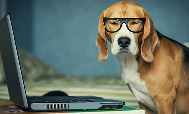 It seems that humans can also benefit from the presence of dogs in the workplace