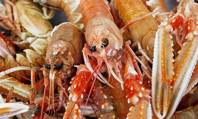 illegal-shellfish-operations